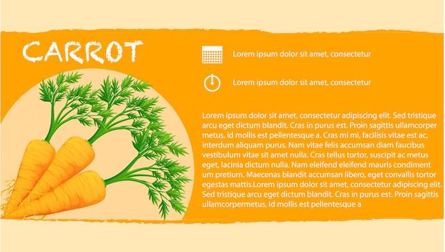 Infográfico com cenouras frescas Vetor grátis
