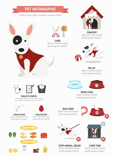 Infográfico de cão, cartaz informativo pronto para imprimir Vetor Premium