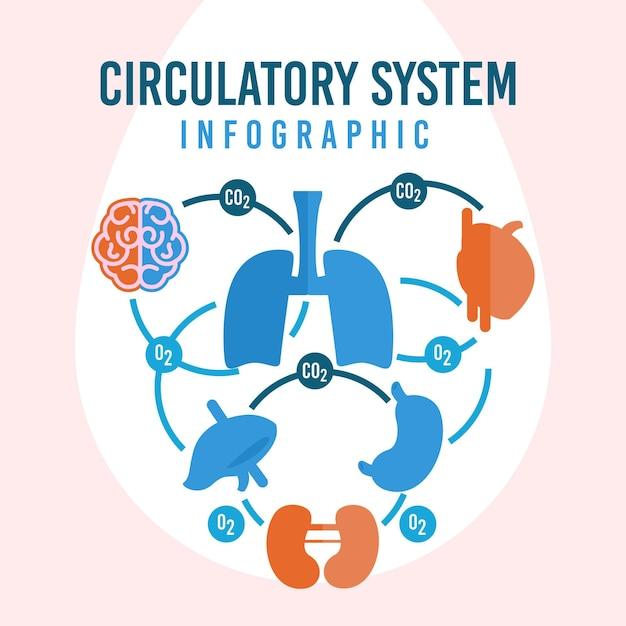 Infográfico de design plano do sistema circulatório Vetor grátis