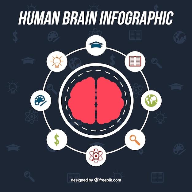 Infográfico rodada do cérebro humano com ícones Vetor grátis