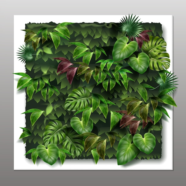 Jardim vertical quadrado ou parede verde com folhas verdes tropicais Vetor grátis