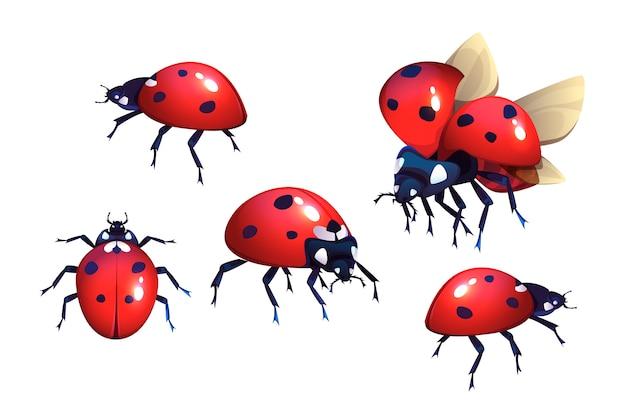 Joaninhas com manchas vermelhas e pretas Vetor grátis