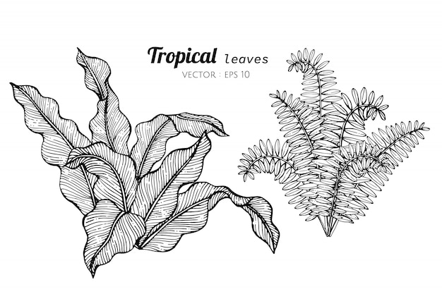Jogo da coleção das folhas tropicais que desenham a ilustração. Vetor Premium