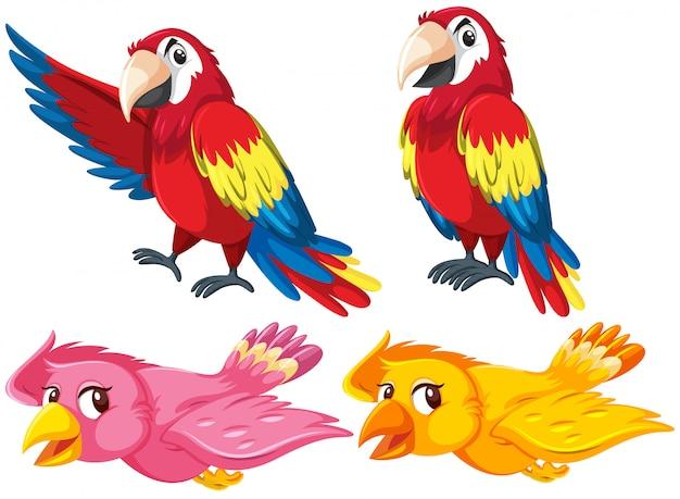 Jogo, de, diferente, pássaros Vetor Premium