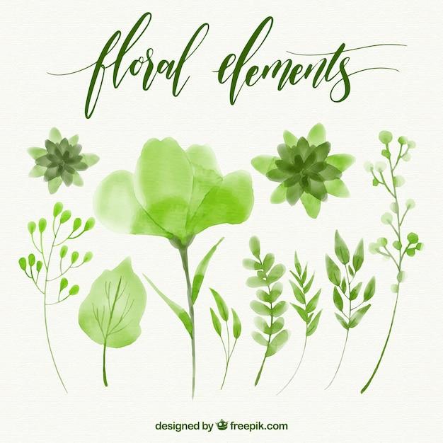 Jogo dos elementos aquarela floral verde Vetor grátis