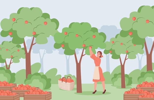 Jovem de vestido vermelho colhendo maçãs vermelhas maduras Vetor Premium