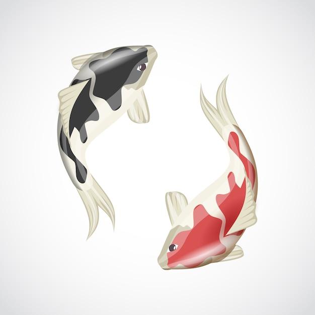 Koi fish illustration Vetor grátis
