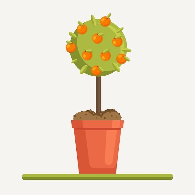 Laranjeira com frutos em panela com solo, solo. plantando mudas Vetor Premium