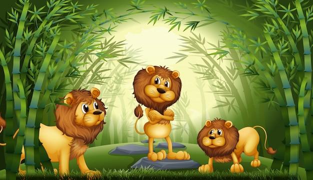 Leão na floresta de bambu Vetor Premium