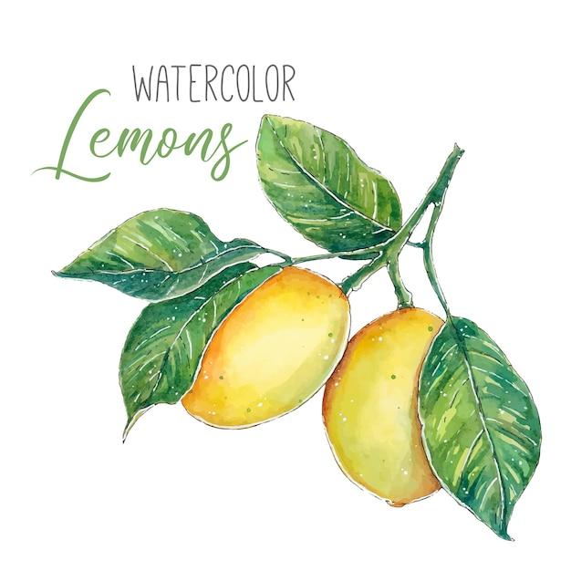 Limões em aquarela em um galho com folhas verdes Vetor Premium