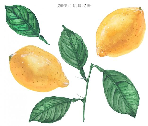 Limões Vetor Premium