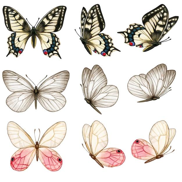 Linda coleção de borboletas em aquarela em diferentes posições Vetor Premium