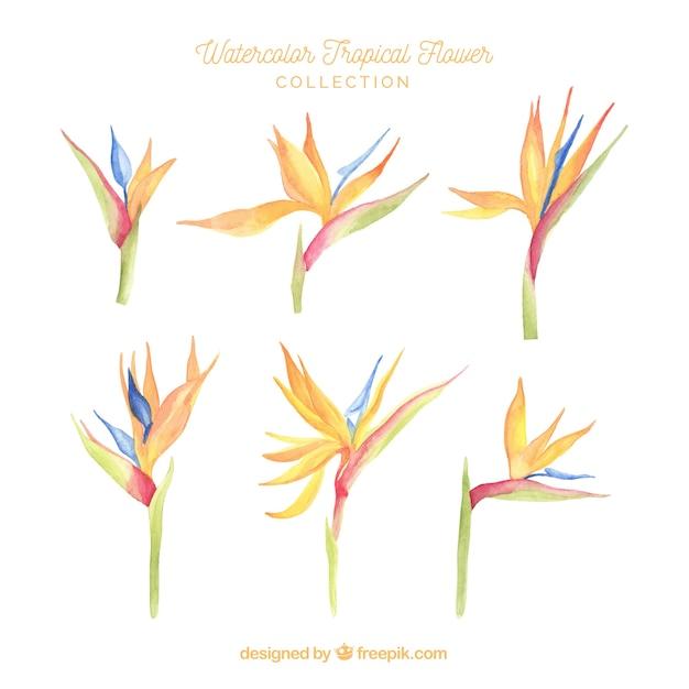 Linda colecção de flores tropicais em aquarela Vetor grátis