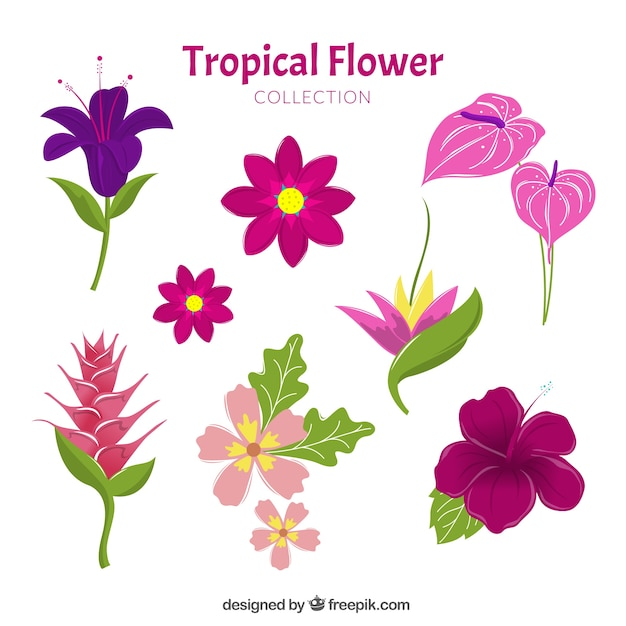 Linda mão desenhada coleção de flores tropicais Vetor grátis