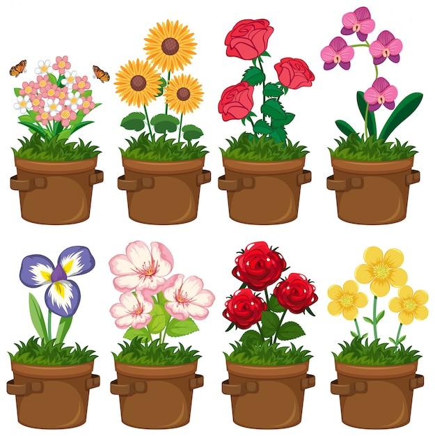 Lindas flores no jardim em fundo branco Vetor Premium