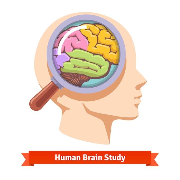 Lupa ampliando dentro da cabeça humana Vetor grátis