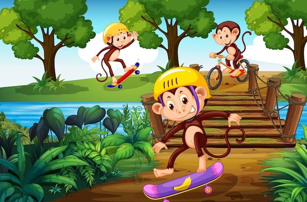 Macaco e esporte radical no parque Vetor Premium