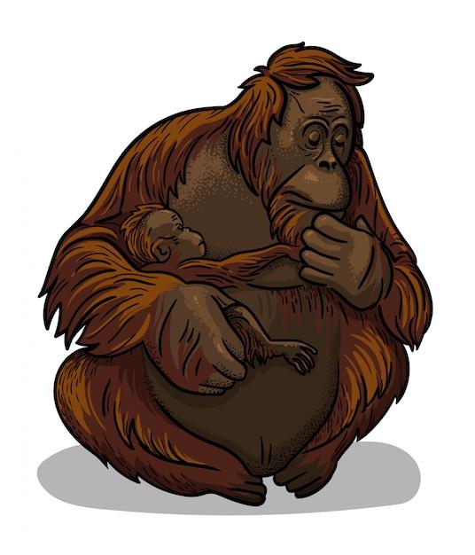 Macaco fêmea animal asiático do orangotango com o assento do bebê-macaco isolado no estilo dos desenhos animados. ilustração educacional de zoologia Vetor Premium