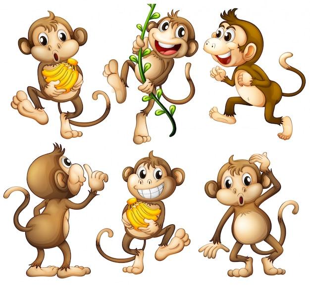Macacos selvagens brincalhões Vetor grátis