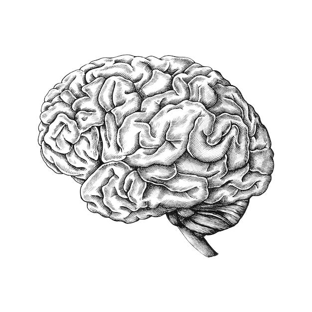 Mão desenhada cérebro humano Vetor grátis