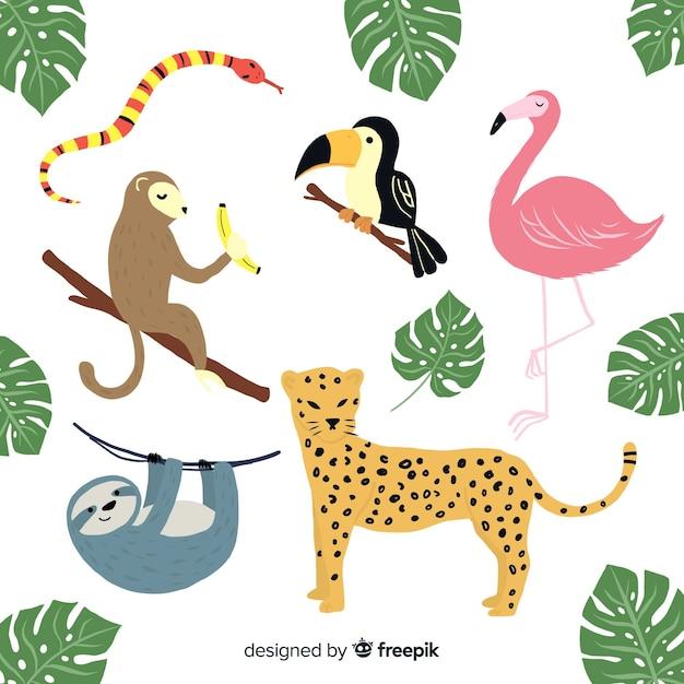 Mão desenhada coleção animal tropical Vetor grátis