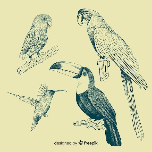 Mão desenhada coleção de aves exóticas Vetor grátis