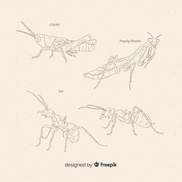 Mão desenhada coleção de esboços de insetos Vetor grátis