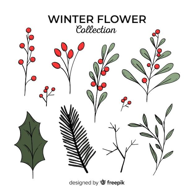 Mão desenhada coleção de flores de inverno Vetor grátis