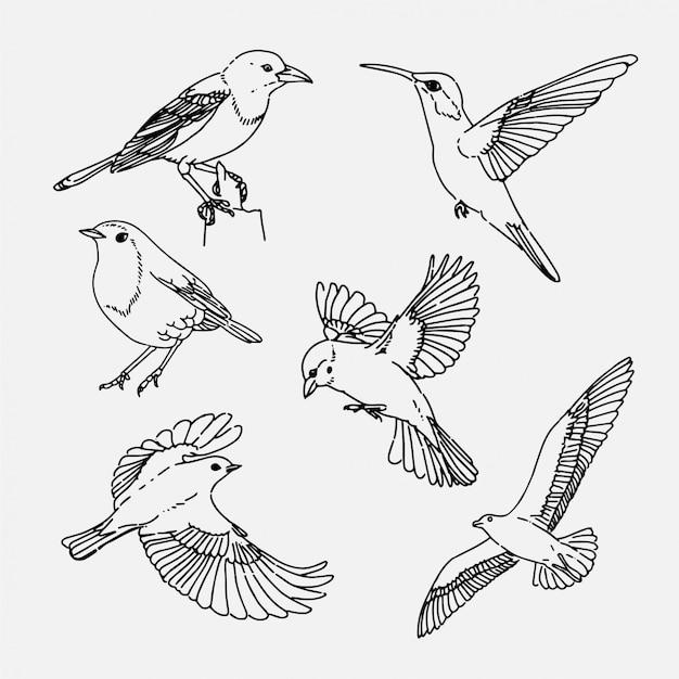 Mão desenhada coleção de pássaros Vetor Premium