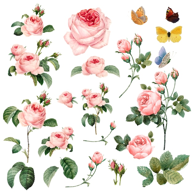 Mão desenhada coleção rosas cor de rosa Vetor grátis