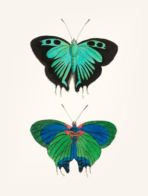 Mão desenhada de borboleta double-tailed preta Vetor grátis