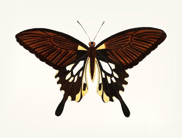 Mão desenhada de borboleta preta com asas de cauda Vetor grátis