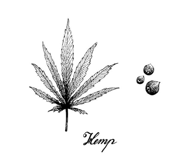 Mão desenhada de folha de cânhamo e sementes Vetor Premium