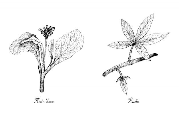 Mão desenhada de folhas de kai lan e kuka Vetor Premium
