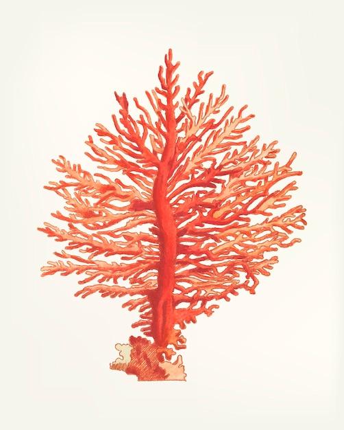 Mão desenhada de gorgonia pinada Vetor grátis