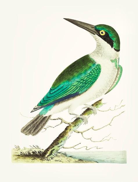 Mão desenhada de kingfisher de cabeça verde Vetor grátis