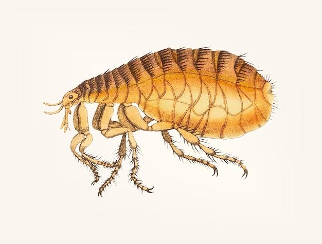 Mão desenhada de pulga Vetor grátis