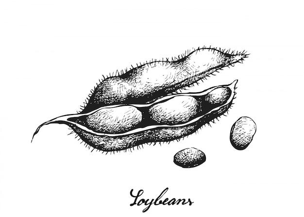 Mão desenhada de soja verde fresco delicioso Vetor Premium