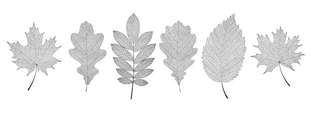Mão desenhada esqueletos de folhas pretas. Vetor Premium