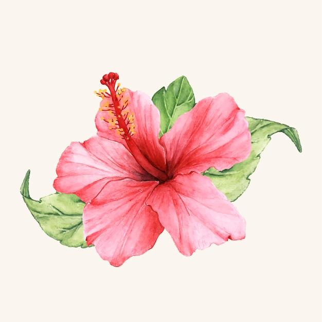 Mão desenhada flor vector isolado Vetor grátis