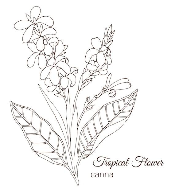 Mão desenhada flores tropicais Vetor Premium