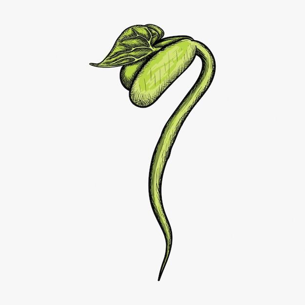 Mão desenhada ilustração de design de logotipo de broto Vetor Premium