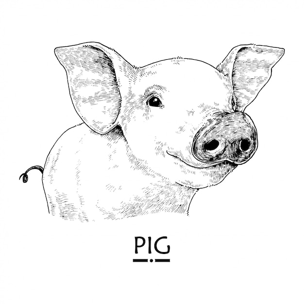Mão desenhada ilustração de porco Vetor Premium