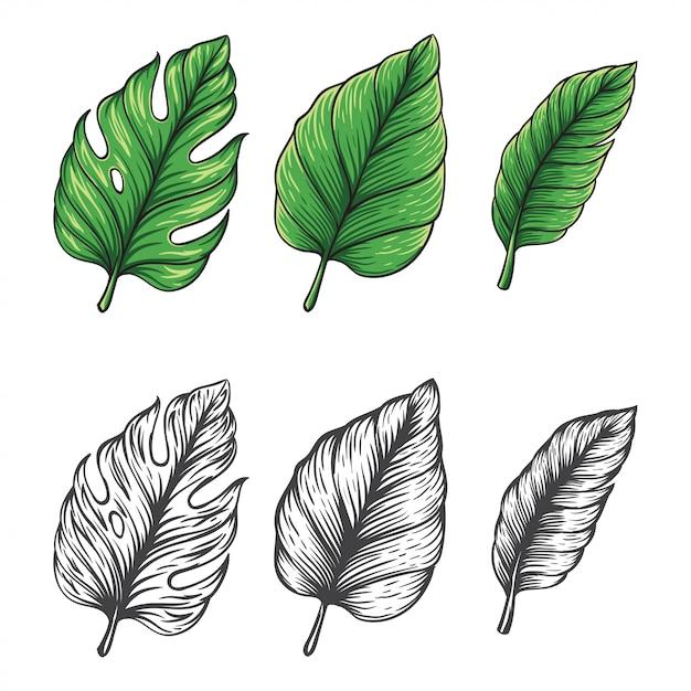 Mão desenhada ilustração do vetor de folha tropical Vetor Premium