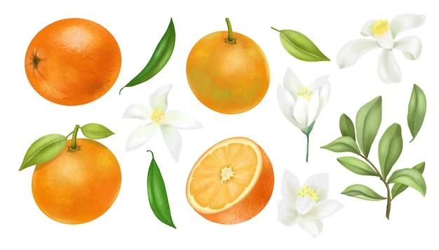 Mão desenhada laranjas galhos de árvores, folhas e clipart de flores de laranja, isolado em um fundo branco Vetor Premium