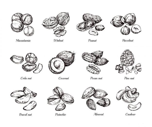Mão desenhada nozes e sementes. doodle desenho amendoim, avelã e caju isolado conjunto Vetor Premium