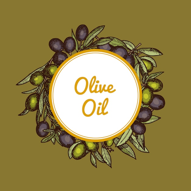 Mão desenhada ramos de oliveira sob o círculo com lugar para texto Vetor Premium