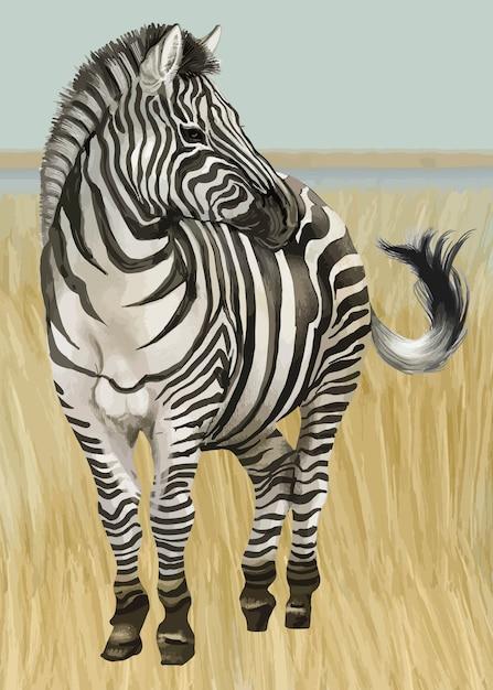 Mão desenhada zebra Vetor grátis