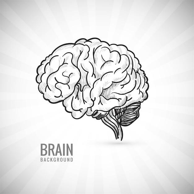 Mão desenhar esboço do cérebro humano Vetor grátis