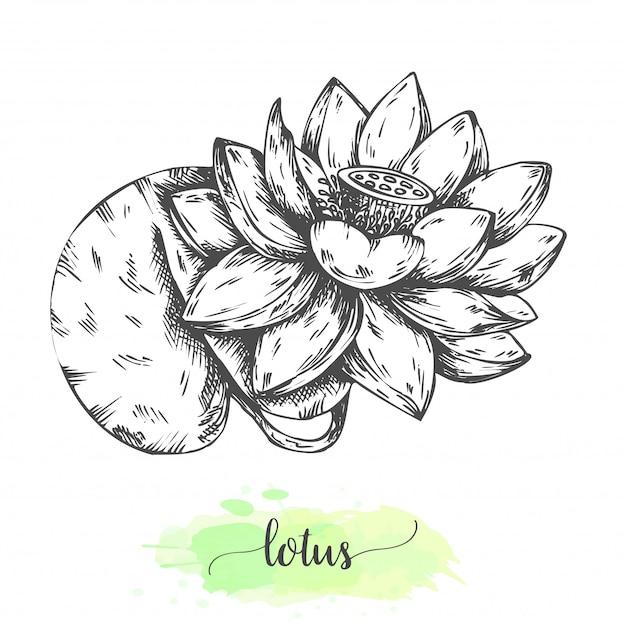 Mão-extraídas flores de lótus. nenúfares florescendo isolados no branco. ilustração vetorial no estilo vintage. esboço de flor tropical contorno waterlily Vetor Premium
